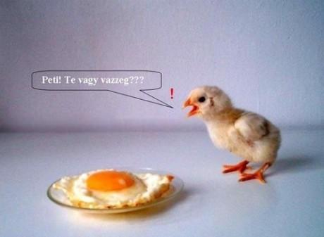 Mi volt előbb? A tyúk vagy a (tükör)tojás?
