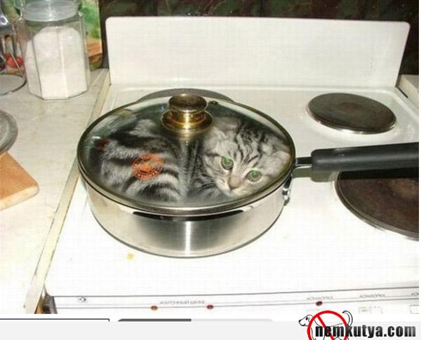 Macska befőzés