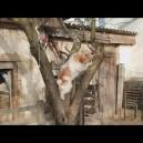Egy kutya megtanul fára mászni a játékáért