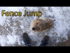 A kerítés ugró kutya
