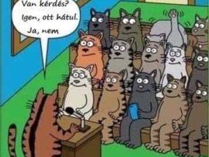 Macskák. :D
