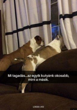 Okos kutya! :D